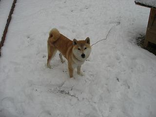 雪って楽しいね!!