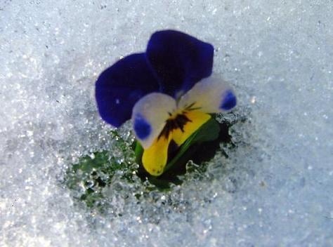雪の花001