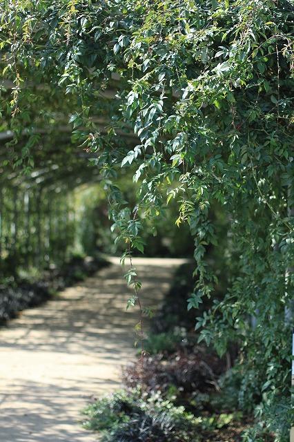 IMG_6237野鳥の森ガーデン