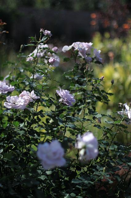 IMG_6252野鳥の森ガーデン