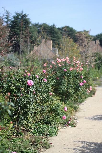 IMG_6260野鳥の森ガーデン