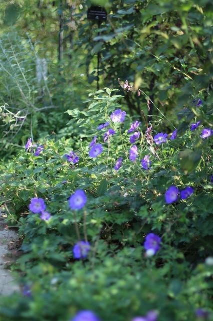 IMG_6265野鳥の森ガーデン