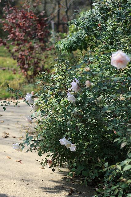IMG_6284野鳥の森ガーデン