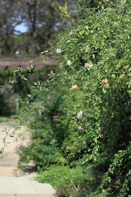 IMG_6286野鳥の森ガーデン
