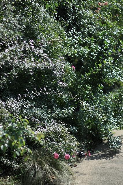 IMG_6322野鳥の森ガーデン