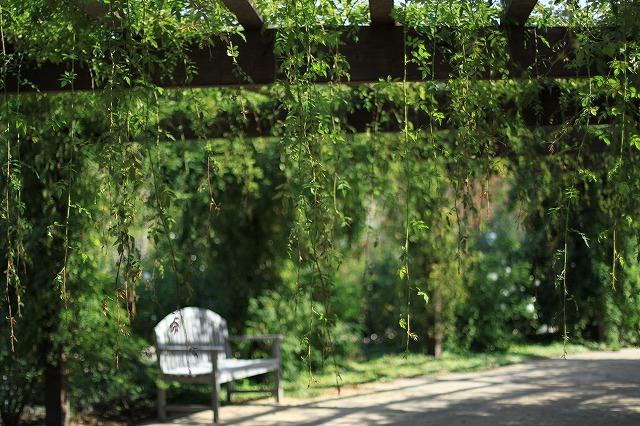 IMG_6326野鳥の森ガーデン