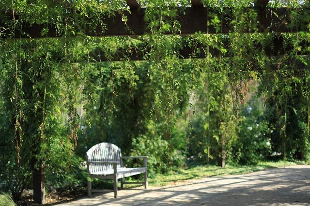 IMG_6328野鳥の森ガーデン