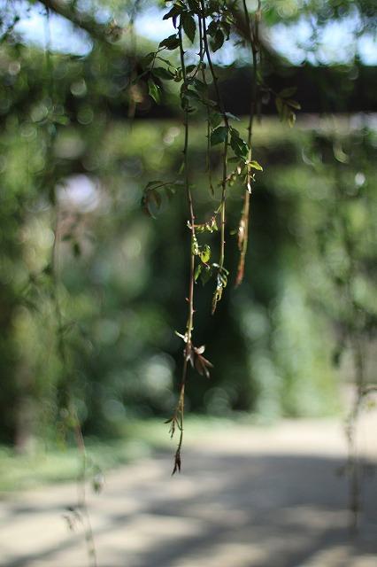 IMG_6330野鳥の森ガーデン