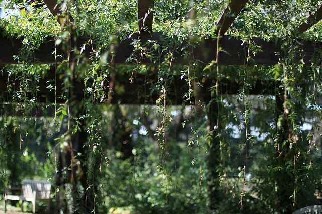 IMG_6334野鳥の森ガーデン