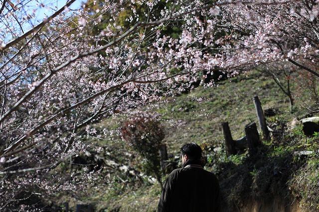 IMG_7174小原四季桜