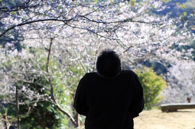 IMG_7179小原四季桜