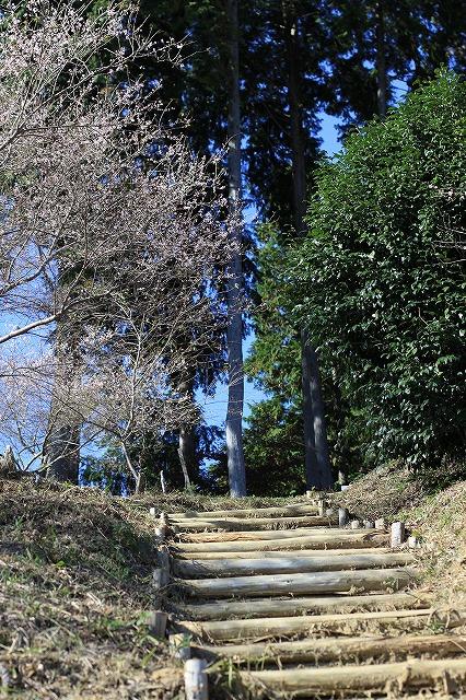 IMG_7184小原四季桜