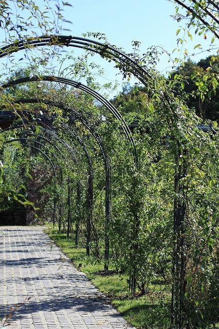 IMG_7210花フェスタ記念公園