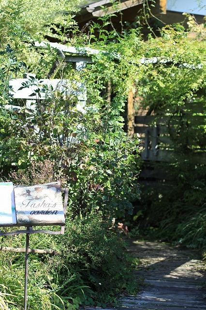 IMG_7294花フェスタ記念公園