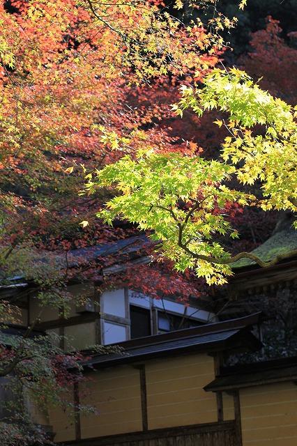 IMG_7349横倉寺