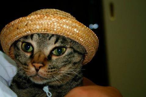 カトル君の麦わら帽子