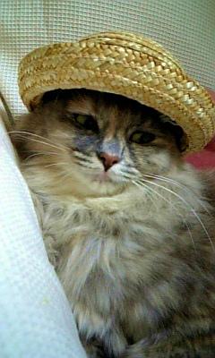 サンクさんの麦わら帽子