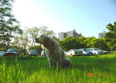 070506_64_kaeru_03.jpg