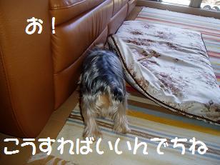 P7290067.jpg