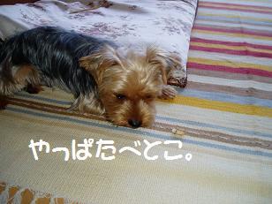 P7290073.jpg