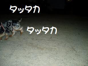 P7300110.jpg