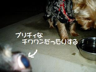 P7300112.jpg
