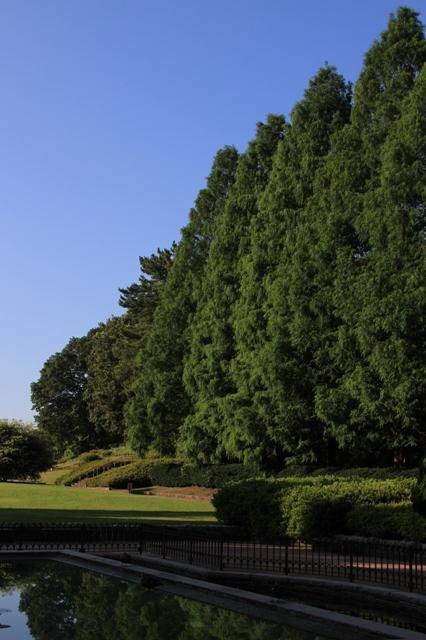 虹の花壇とメタセコイア並木