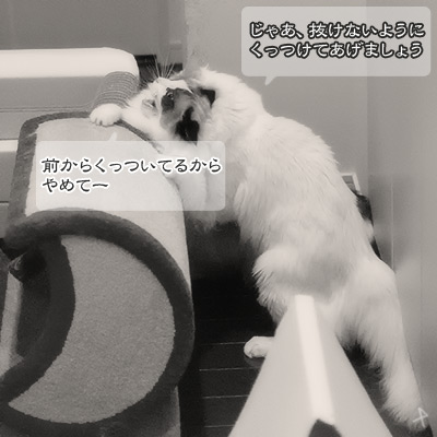 20120417_6.jpg