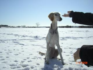 雪っておいしい?