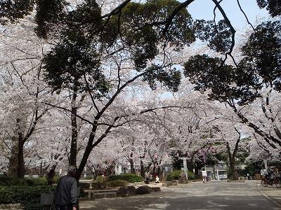神社の公園