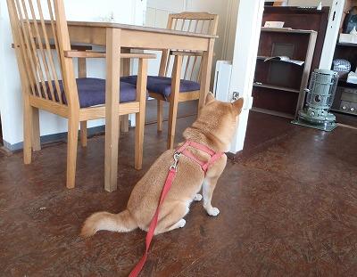 RAIN DOGS cafe