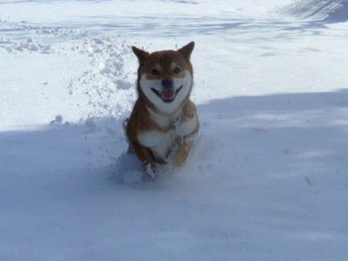 雪がふわふわ~