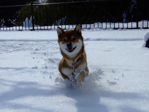 雪がキラキラ~