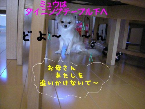200802073.jpg