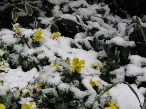 ブログ用雪2・3