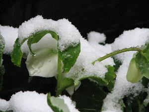 ブログ用雪2・3-2
