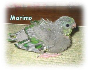 20040401mari2.jpg