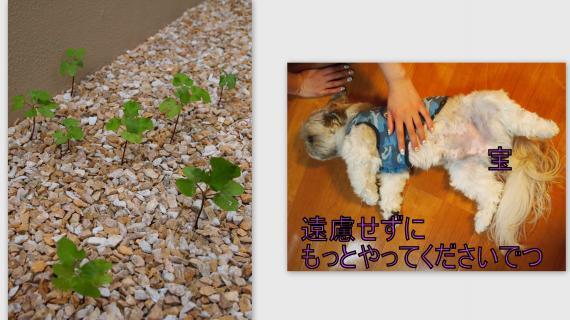 2011-07-073_convert_20110709022008.jpg