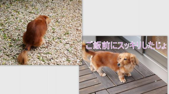 2011-07-074_convert_20110709022029.jpg