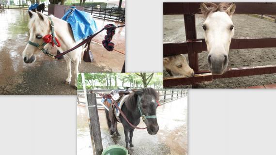 2011-07-2415_convert_20110728144004.jpg