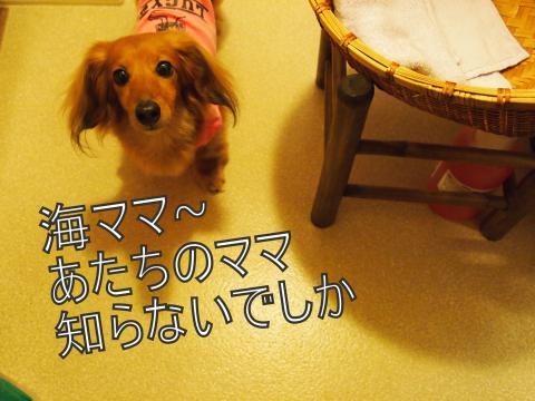 ・搾シ姫5314336_convert_20110617004613