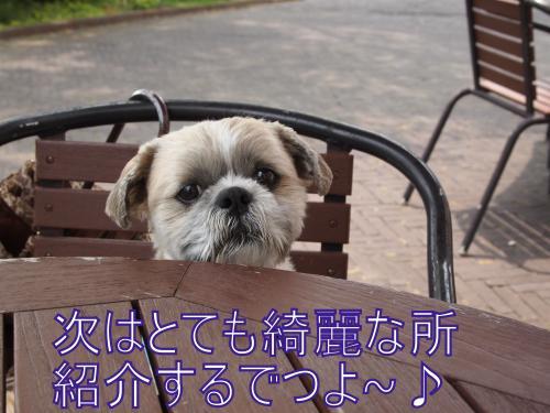 ・搾シ単6024475_convert_20110619214557
