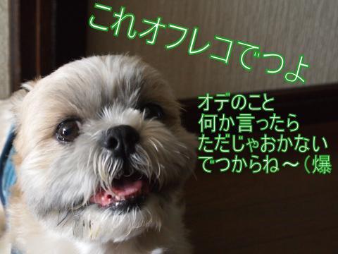 ・搾シ善7055009_convert_20110705143600