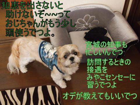 P705499・搾シ狙convert_20110705143727