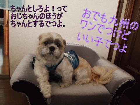 ・搾シ鳳7055000_convert_20110705143706