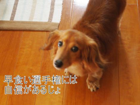 ・搾シ猶7075026_convert_20110709022555