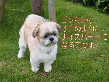 ・搾シ善7034924_convert_20110711014459