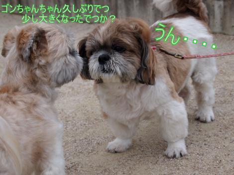 ・搾シ鳳7034929_convert_20110711014610
