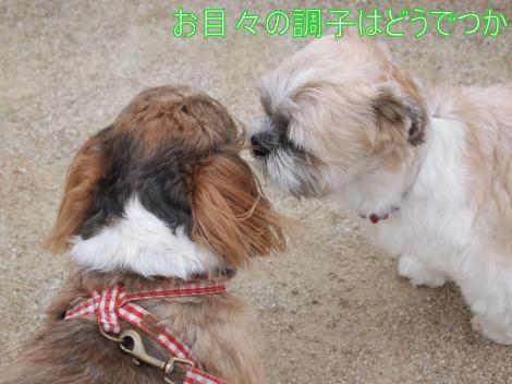 ・搾シ儕7034925_convert_20110711014639