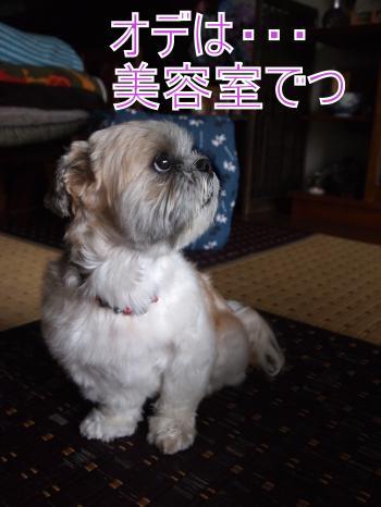 ・搾シ撤7034919_convert_20110712020323